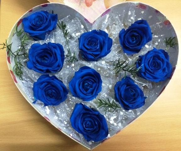 anh hoa hong xanh 1