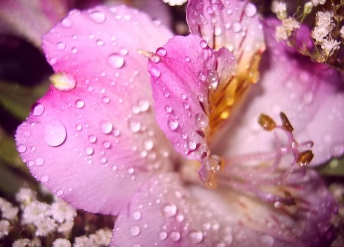 loat anh hoa va giot suong dep