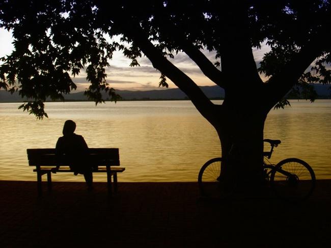 Ghế, cây và người cô đơn