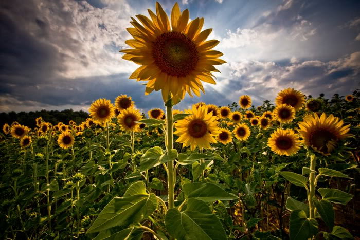 hinh vuon hoa dep nhat