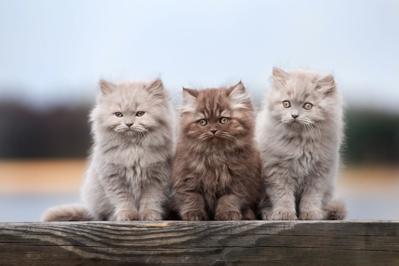 Lại 3 chú mèo con đáng yêu nữa