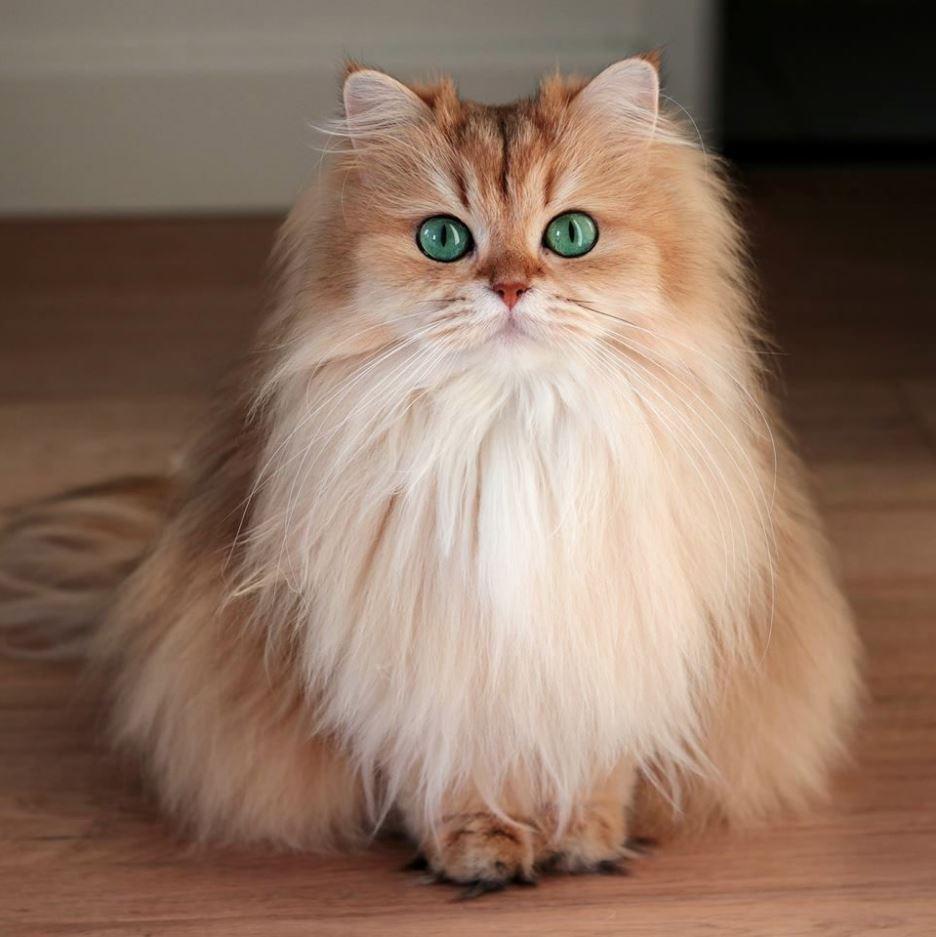 Một chú mèo vàng siêu dễ thương