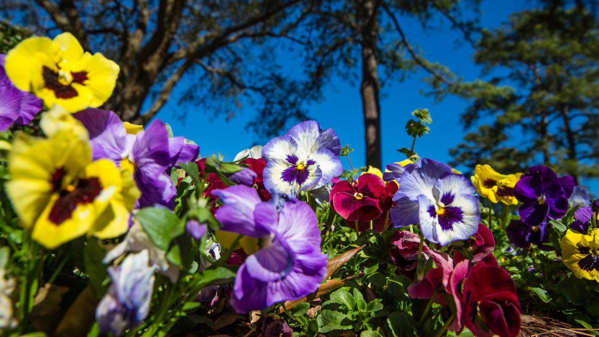Những bông hoa đầy sắc màu