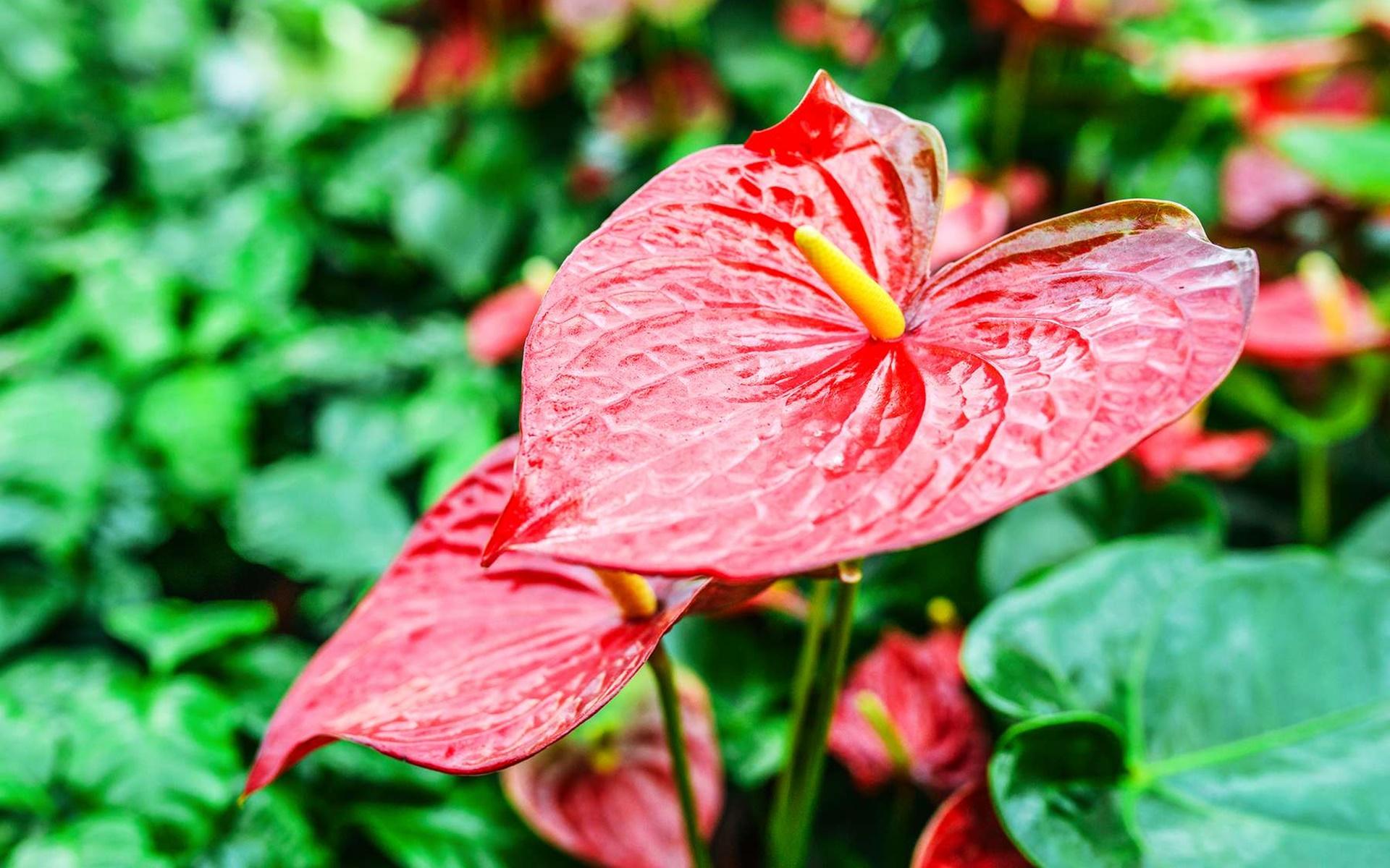 Một tấm hình nền máy tính về hoa độc đáo