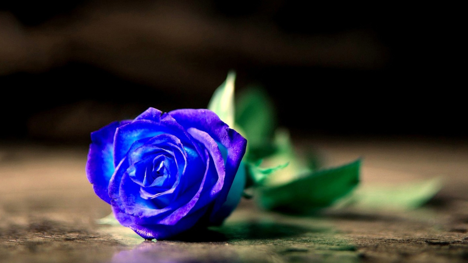 Những bông hồng xanh luôn mang vẻ đẹp huyền bí